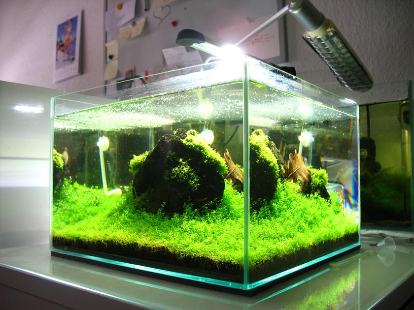 aquael decolight led 5w clairage led pour nano aquarium d 39 eau douce lampes et spots lampes. Black Bedroom Furniture Sets. Home Design Ideas