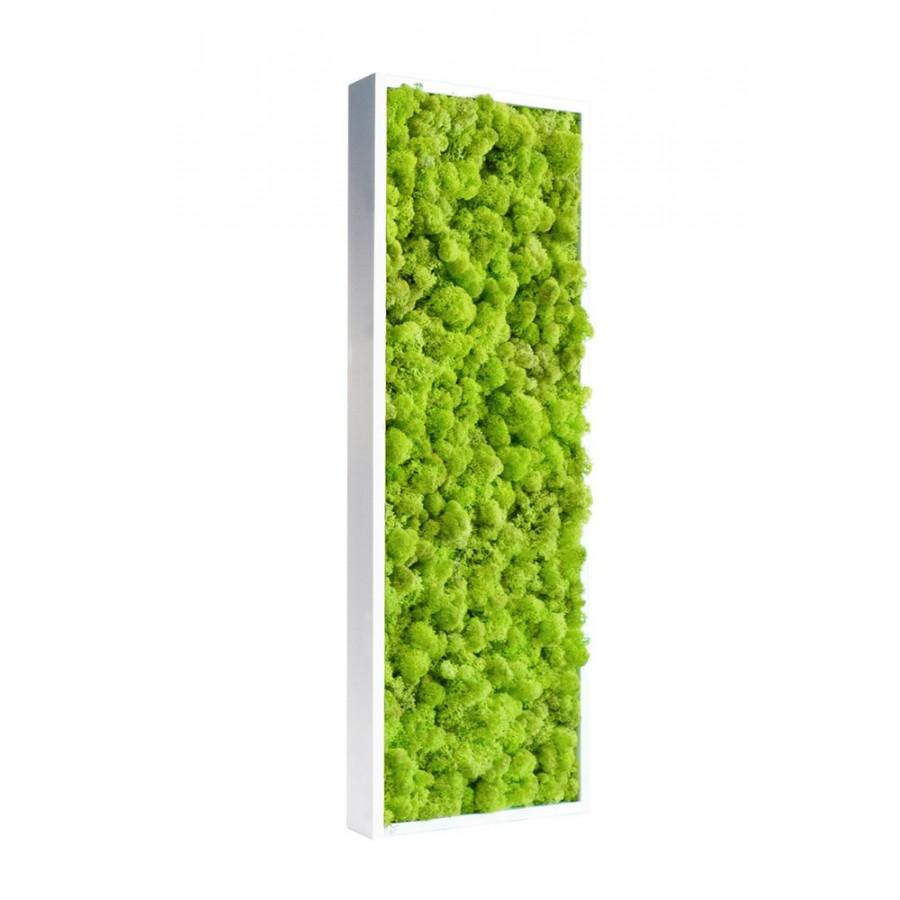Tableau de lichen stabilis vert citron pour bureau Tableau vegetal stabilise pas cher