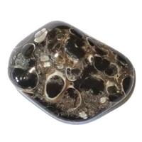 Agate fossile Turitelle de 20 à 30 mm