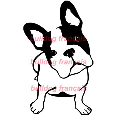 Stickers autocollant sticker voiture tuning chien bulldog for Autocollant mural francais