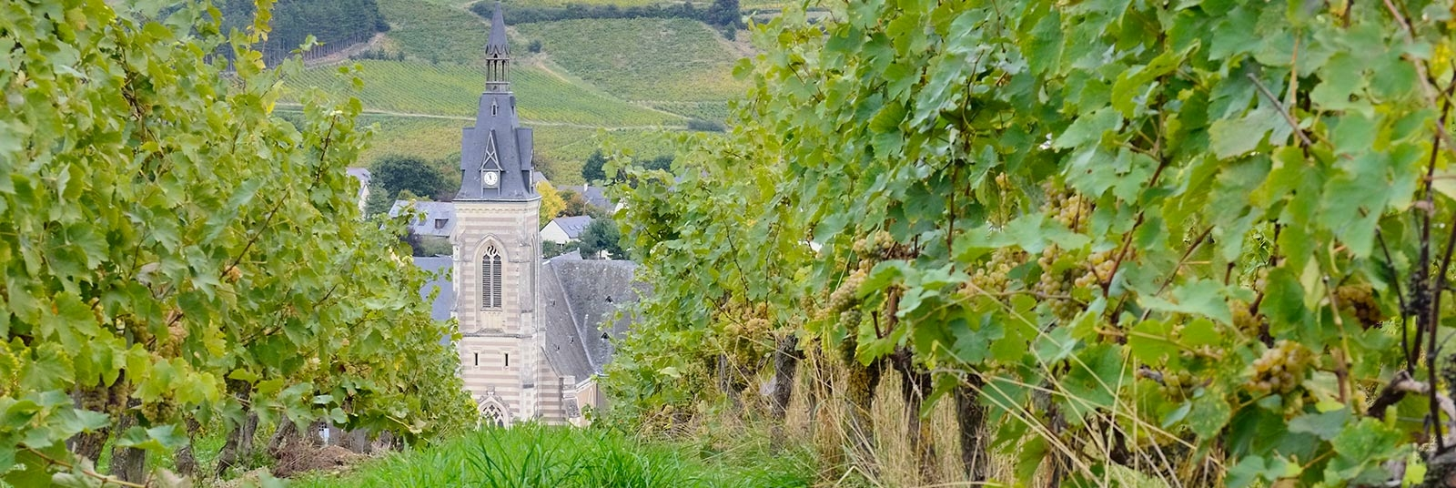 vigne vin eglise domaine cady bandeau