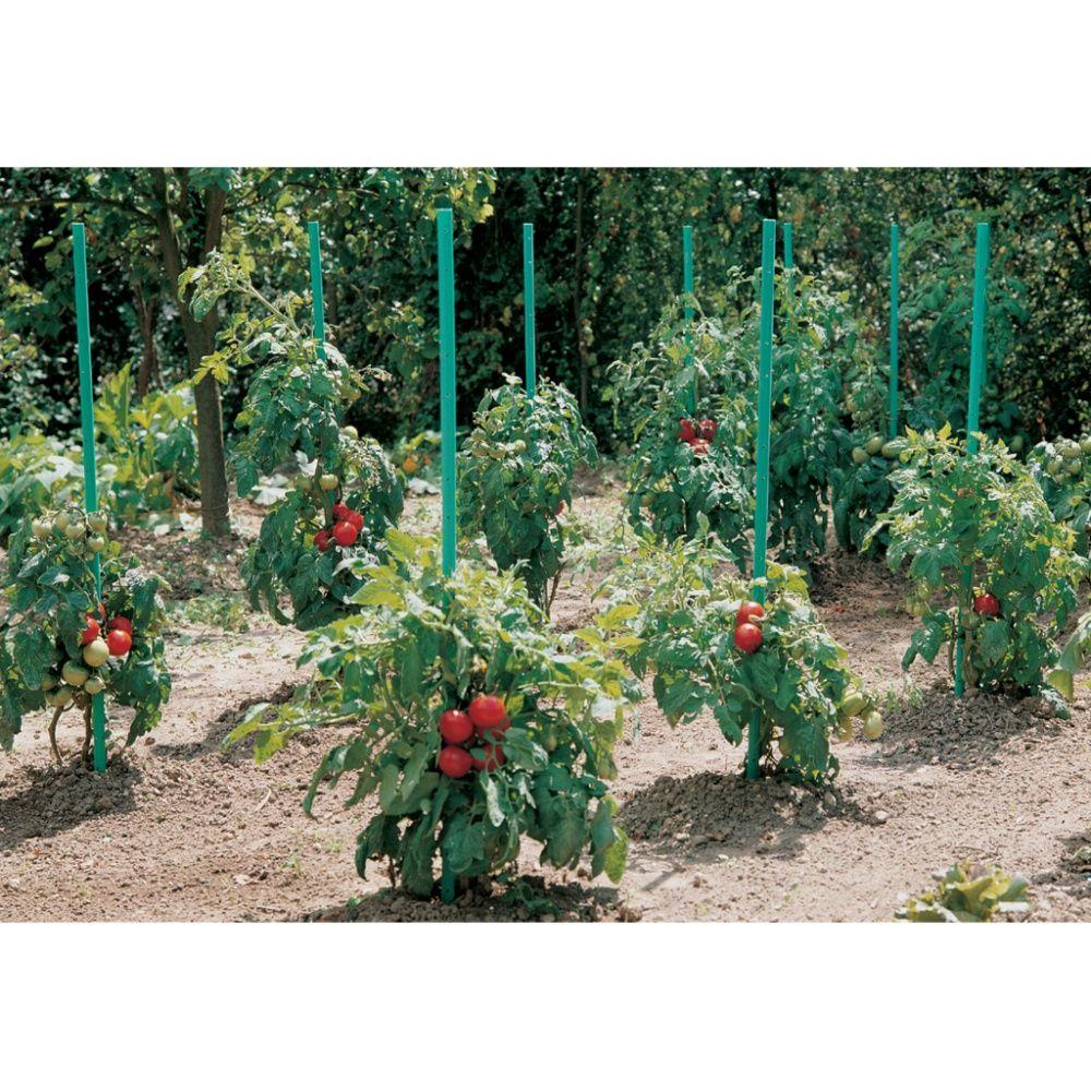 Tuteurs tomates à réserve d\'eau