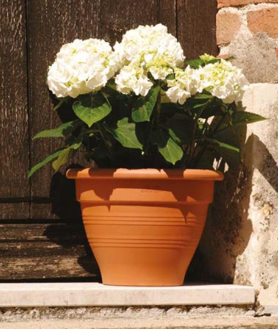 pot Campana la jardinerie de pessicart Nice