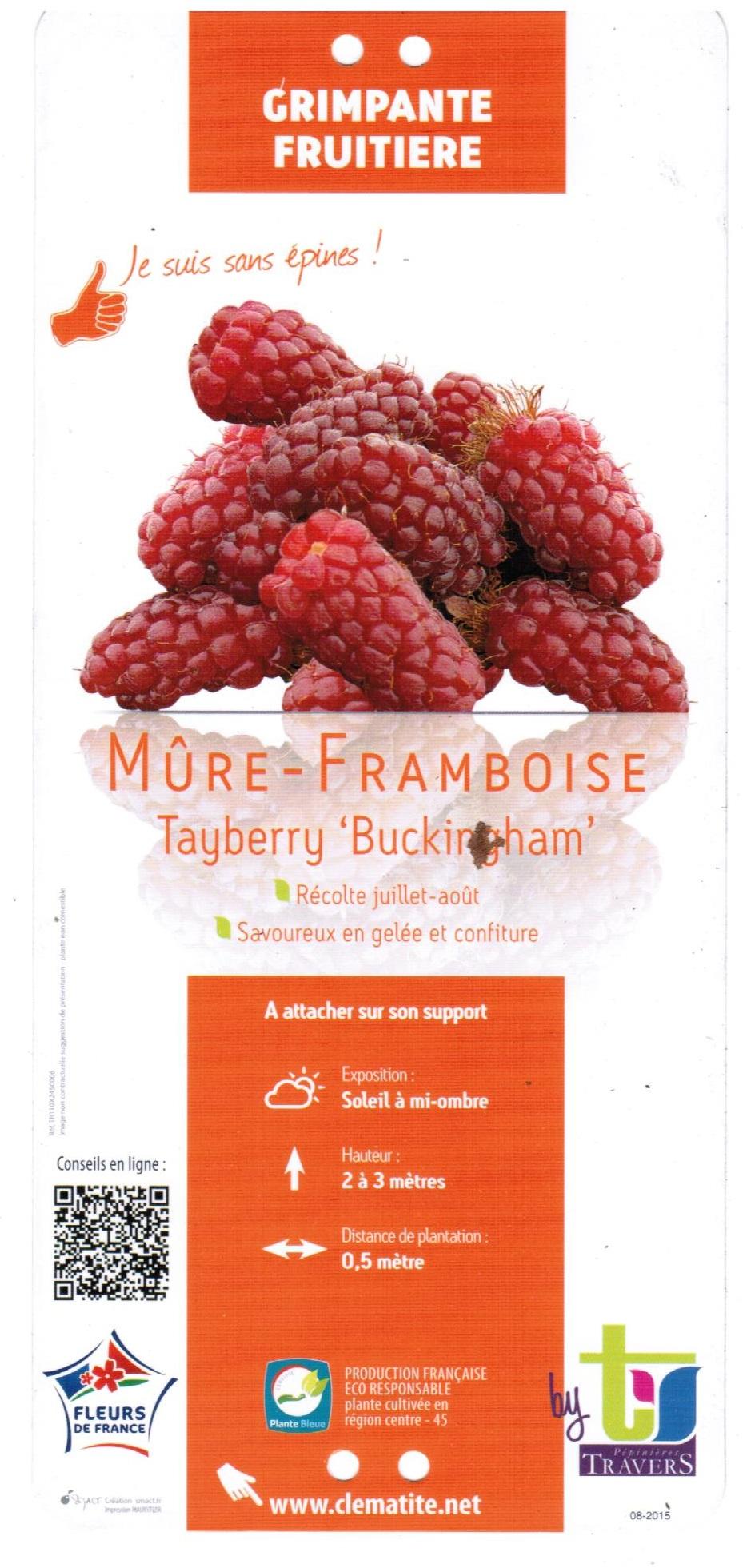 Mûre Framboise Tayberry Buckincham  la jardinerie de pessicart nice 06100 001