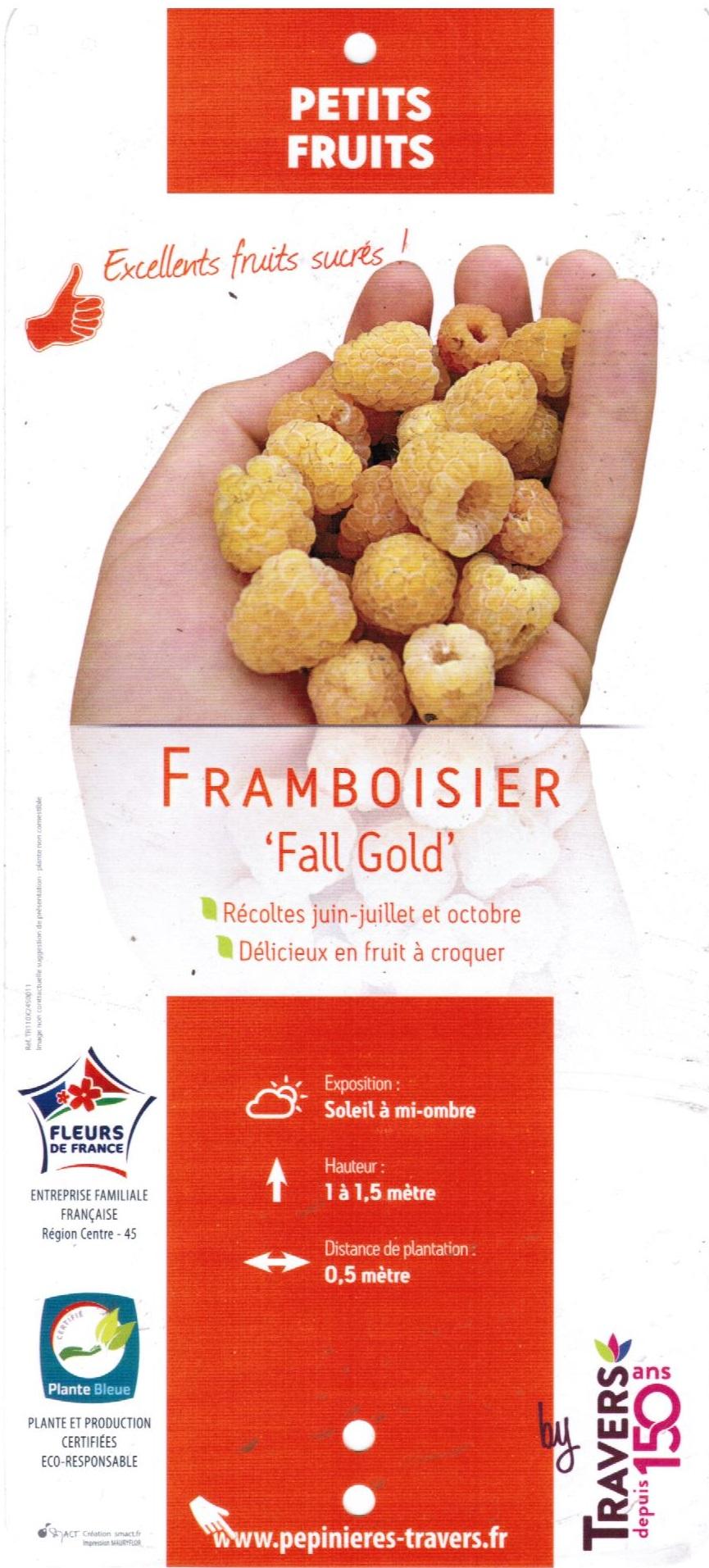 Framboisier Fall Gold la jardinerie de Pessicart Nice 06100 001