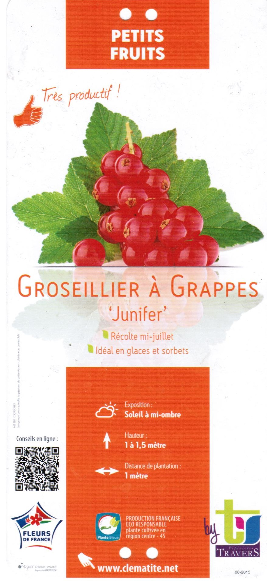 Groseiller à Grappes Junifer - La Jardinerie de Pessicart 06100 Nice 001