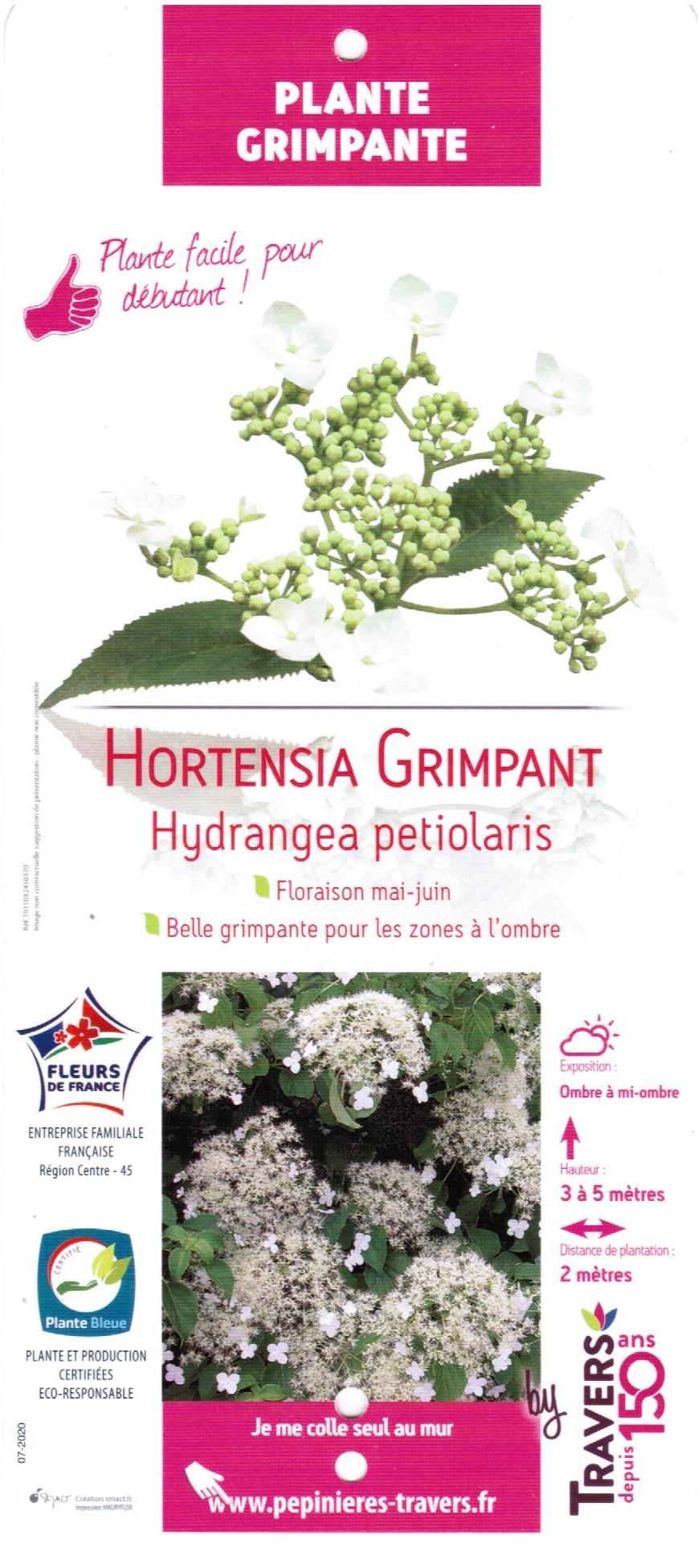 Hortensia Grimpant Hydrangea petiolaris - La Jardinerie de Pessicart 06100 Nice 001