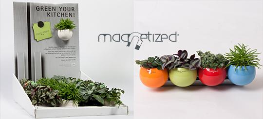 cache pot magnetized  4 - La jardinerie de pessicart nice - Livraison a domicile nice 06 plantes vertes terres terreaux jardinage décoration intérieur.jpg.crdownload