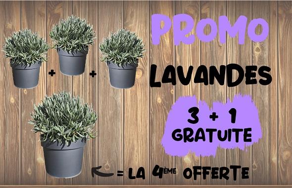 lavandes PROMO 3+1