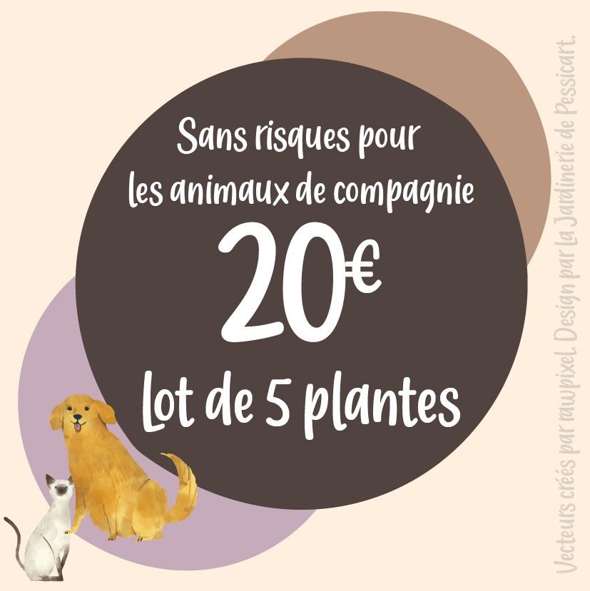 PROMO: 5 plantes \'Pet Friendly\'