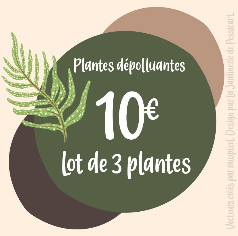 PROMO: 3 plantes dépolluantes