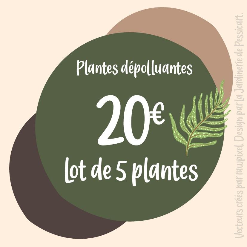 PROMO: 5 plantes dépolluantes