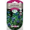 Centaurée barbeau bleu (bleuet)