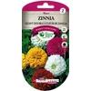 Zinnia géant double à fleur de dahlia