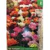 La jardinerie de Pessicart Bulbes les doigts verts Tulipes doubles mix 10