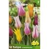 La jardinerie de Pessicart Bulbes les doigts verts Tulipes Leliebloemig mix 10
