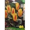 La jardinerie de Pessicart Bulbes les doigts verts Tulipes Chopin 10