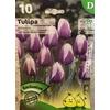 La jardinerie de Pessicart Bulbes les doigts verts Tulipes Atlantis 10