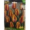 La jardinerie de Pessicart Bulbes les doigts verts Tulipes Cape Cod 10