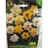 La jardinerie de Pessicart Bulbes les doigts verts Narcisses Mix double 5