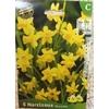 La jardinerie de Pessicart Bulbes les doigts verts Narcisses tete a tete 5