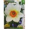 La jardinerie de Pessicart Bulbes les doigts verts Narcisses Barret Browning 5