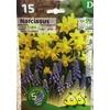 La jardinerie de Pessicart Bulbes les doigts verts Narcisses Tete a tete Muscasis 15+5