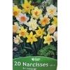 La jardinerie de Pessicart Bulbes les doigts verts Narcisses en melange 20