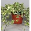 lierre hedera 10- La jardinerie de pessicart nice - Livraison a domicile nice 06 plantes vertes terres terreaux jardinage arbres cactus