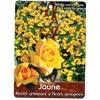rosier grimpant jaune fleurs groupees - La jardinerie de pessicart nice - Livraison a domicile nice 06 plantes vertes terres terreaux jardinage arbres cactus