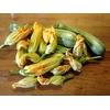 courgette longue de nice potager - La jardinerie de pessicart nice - Livraison a domicile nice 06 plantes vertes terres terreaux jardinage arbres cactus