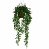lierre hedera suspension 4 - La jardinerie de pessicart nice - Livraison a domicile nice 06 plantes vertes terres terreaux jardinage arbres cactus