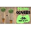 photo site promo oliviers 1+1-50