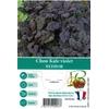 Choux Kale violet Redbor - La Jardinerie de Pessicart Nice 06100