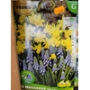 10 Narcisse TETE A TETE + 5 Muscar OFFERTS