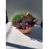 Coupe terre cuite de Ø 20 cm - La Jardinerie de Pessicart Nice 06100
