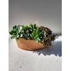 Barque en terre cuite de 30 cm - La Jardinerie de Pessicart Nice 06100
