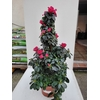 Azalée Pot Ø 19 cm pyramide - Hauteur 60-70 cm - rouge - la jardinerie de pessicart nice 06100