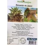 Bananier la jardinerie de pessicart Nice (3)
