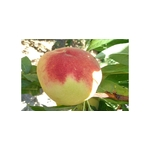 peche-gladys-la-jardinerie-de-pessicart-Nice 06
