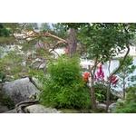 bambou non tracant fargesia 2- La jardinerie de pessicart nice - Livraison a domicile nice 06 plantes vertes terres terreaux jardinage arbres cactus