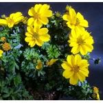 bibens  - La jardinerie de pessicart nice - Livraison a domicile nice 06 plantes vertes terres terreaux jardinage arbres cactus
