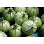 courgette ronde de nice potager - La jardinerie de pessicart nice - Livraison a domicile nice 06 plantes vertes terres terreaux jardinage arbres cactus