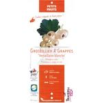 Groseillier à grappes Versaillaise blanche la jardinerie de Pessicart Nice 06100 001