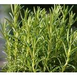 Romarin - Image par samsevents de Pixabay  - La jardinerie de pessicart nice - Livraison a domicile nice 06 plantes vertes terres terreaux jardinage arbres cactus