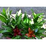Coupe basse muguet - La jardinerie de pessicart - nice Livraison plantes idées cadeau (10)