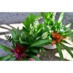 Coupe basse muguet - La jardinerie de pessicart - nice Livraison plantes idées cadeau (8)