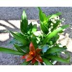 Coupe basse muguet - La jardinerie de pessicart - nice Livraison plantes idées cadeau (9)