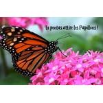 pentas Photo credit jjjj56cp on VisualHunt.com - La jardinerie de pessicart nice - Livraison a domicile nice 06 plantes vertes terres terreaux jardinage arbres cactus