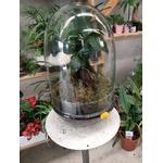 Terrarium Bonsaï M la jardinerie de pessicart nice 06100